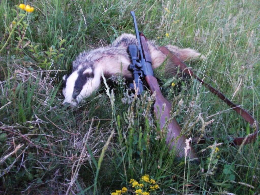 Braconier prins când se întorcea de la vânătoare de bursuci