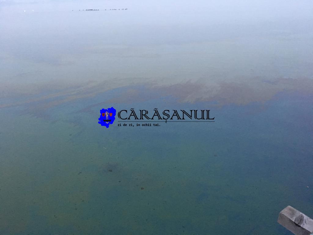 Poluare majoră pe Dunăre cu reziduuri petroliere