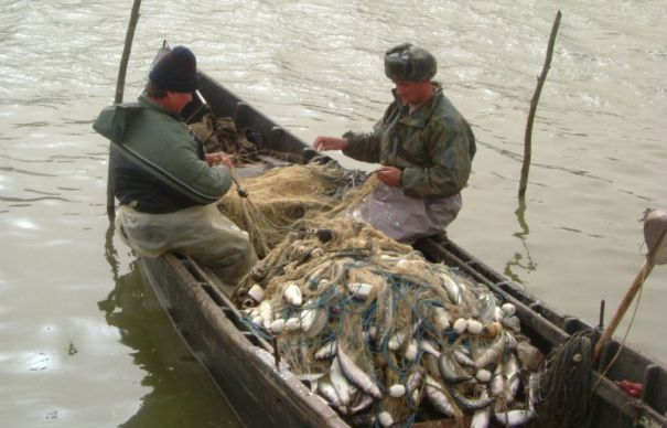 Ministerul Agriculturii in scandal cu pescarii,pescuitul pe Dunare va fi interzis!