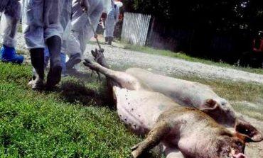 Alerta in Banat,pesta porcină, confirmată în Hunedoara!