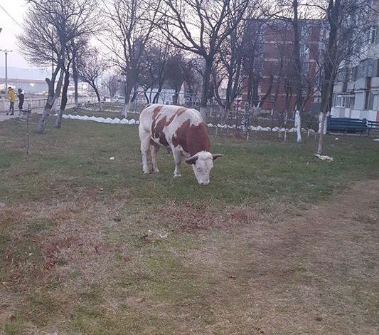 ,,M9 Evolution ,,atracția crescătorilor de animale!Liber la pășunat,fără taxe!