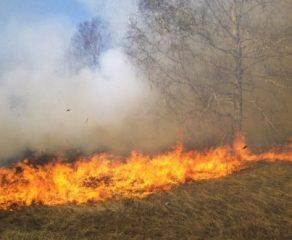 Incendiu puternic de vegetatie in aproprierea orasului Moldova Noua