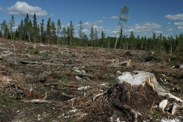 Comisia Europeană cere României să pună capăt exploatării forestiere ilegale