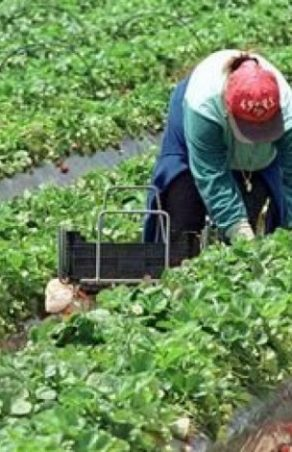 Ungaria a deschis granița pentru muncitorii sezonieri doriți de Austria și Germania
