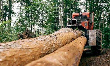 Cărăseni, taie lemn nu se joaca peste 1.300 de metri cubi de lemn au fost confiscaţi în Caraș-Severin, în ultimele două săptămâni