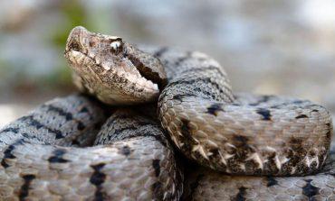 Atenţie la vipere! În Parcul Național Portile de Fier  s-au înmulţit şerpii veninoşi, în această perioadă