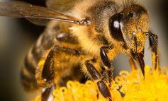 Partidul Verde este partener oficial al inițiativei civice europene ,,Salvați albinele și fermierii´´