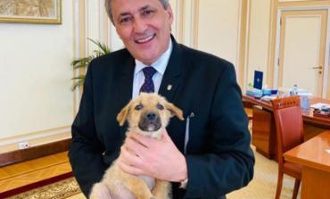 Declaraţia zilei aparţine,lui  Marcel Vela,,Noi trebuie să protejăm viața animalelor,,