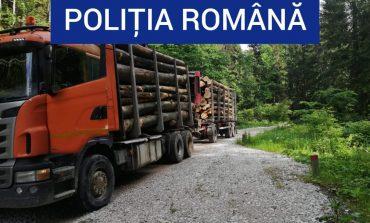 Material lemnos de peste 7.000 de lei, confiscat , de polițiști